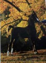 Beautiful Reg Morgan Horse Gelding - $1100 (Perry, GA)