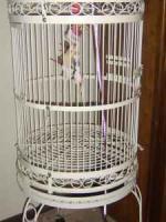 Bird Cage - $100 (Claremore)