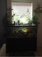 Complete with fish 55 gallon fish tank - $225 (Sw)