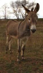 Free Donkey (Butler)